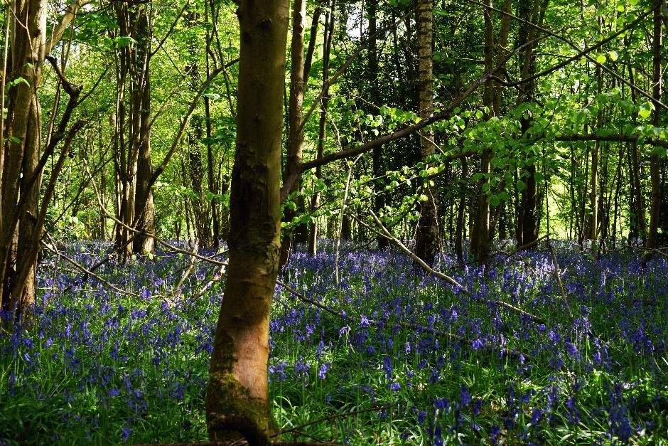 Well managed woodland brings additional income for owners and multiple benefits for communities