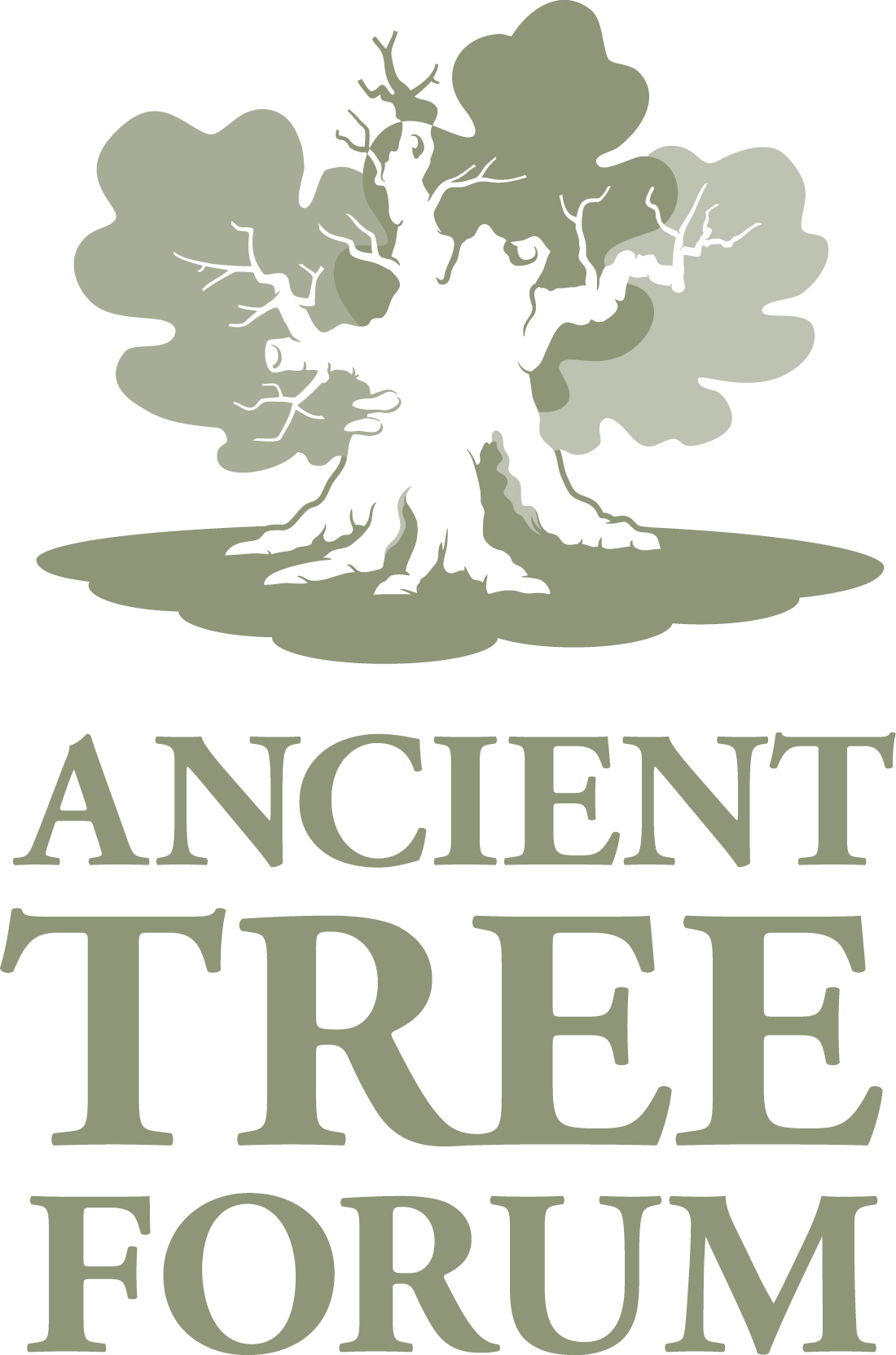 The Ancient Tree Forum