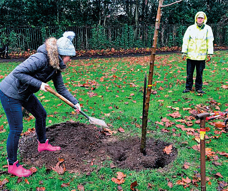New urban trees in Cardiff sponsored by Cardiff Holiday Homes (Photo: Cardiff City Council)