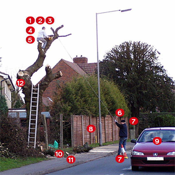 Beware where you are at risk with rogue tree surgeons
