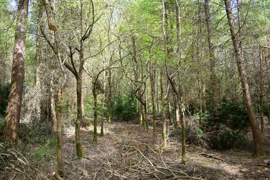 Unmanaged and undermanaged woodland are a lost potential resource for owners and communities alike