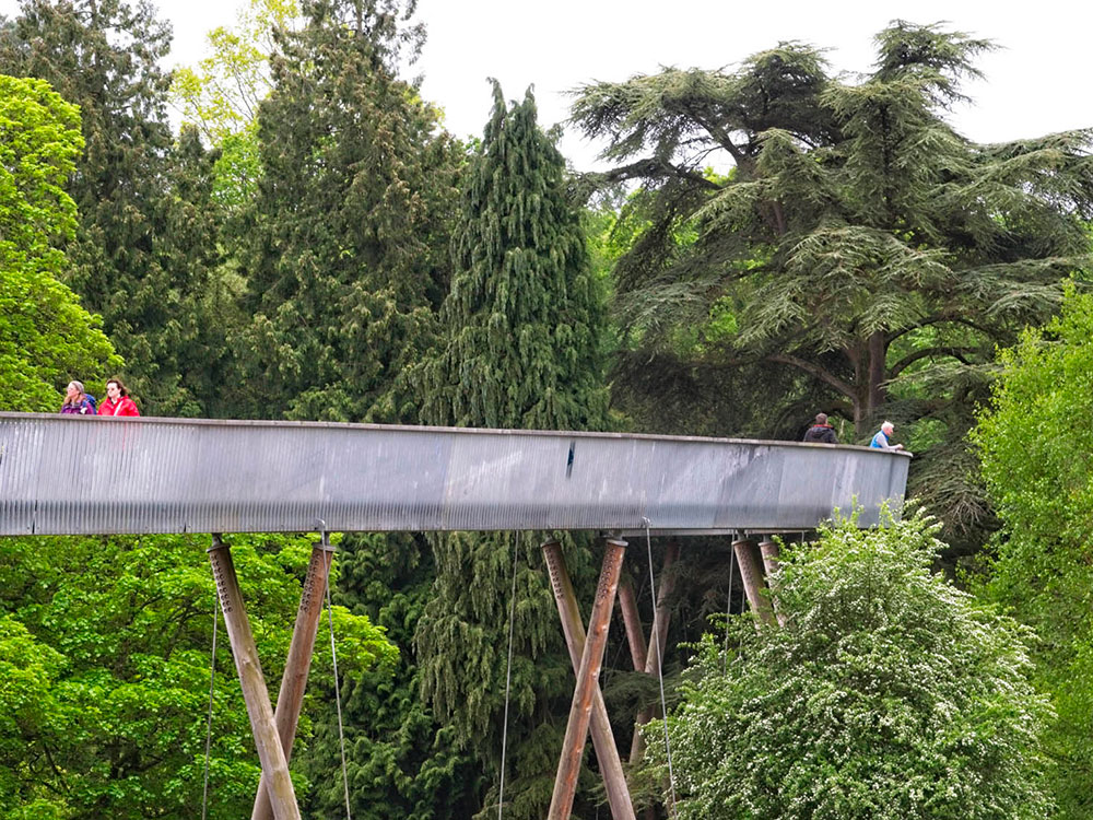 The tree-top walkway provides a unique view of Westonbirt