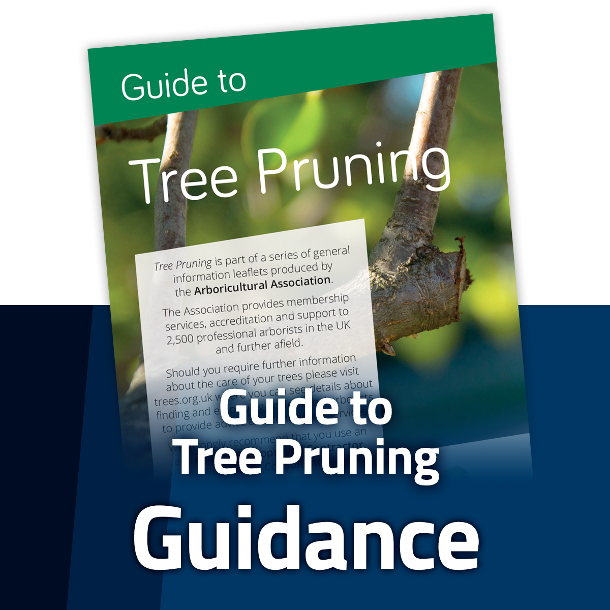 Guide to Tree Pruning