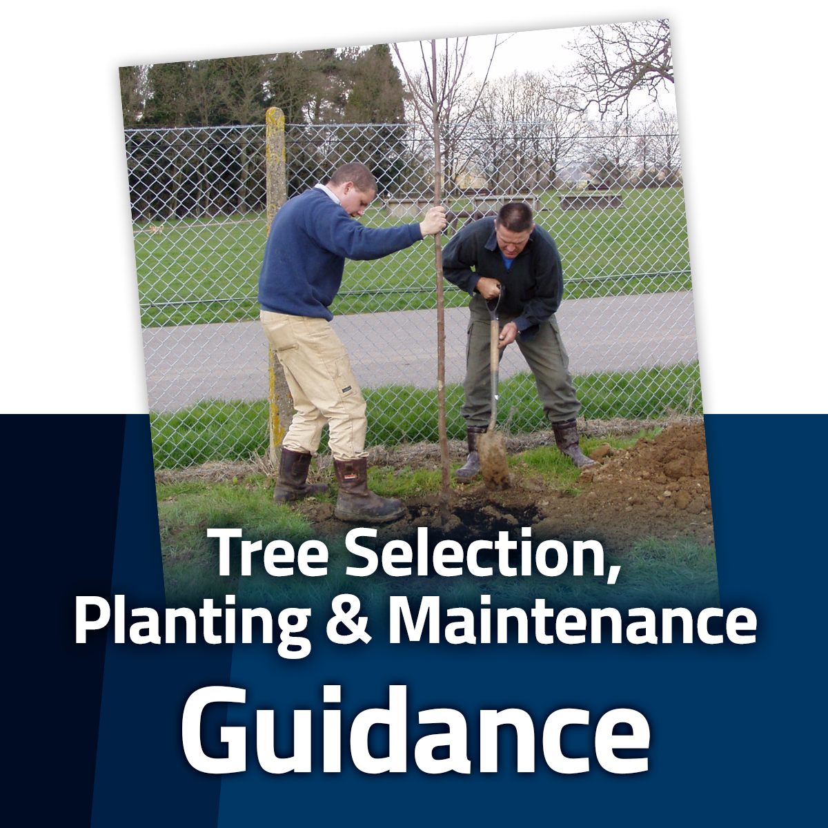 Guide to Tree Selection, Planting and Maintenance