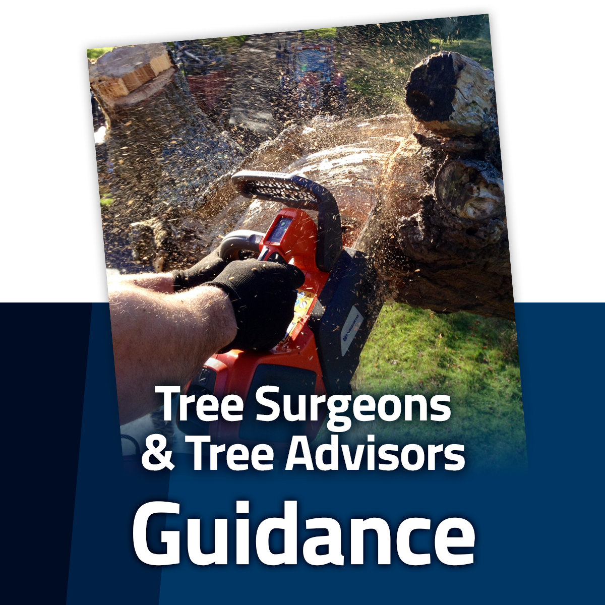 Tree Surgeons & Tree Advisors