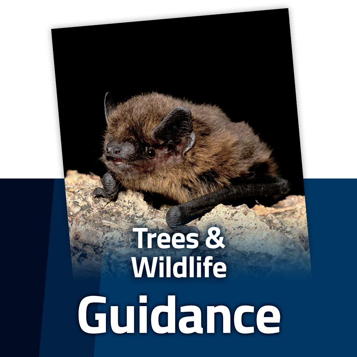 Guide to Trees and Wildlife