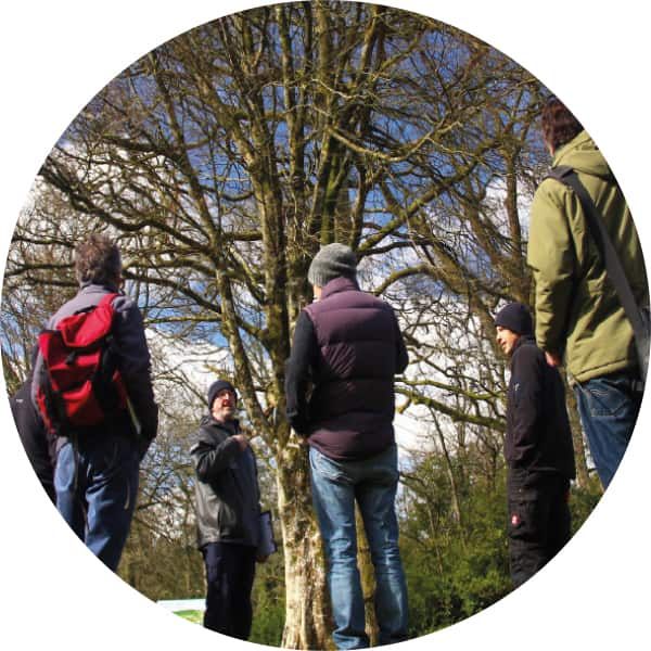 Intermediate Tree Inspection Course