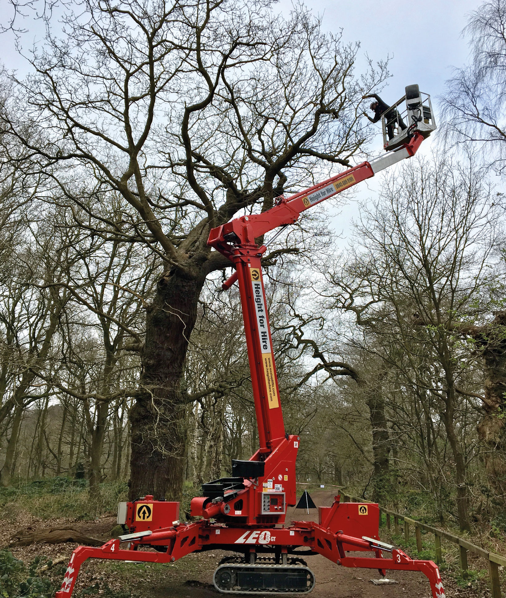 Using the reduction via thinning technique at Sherwood Forest. Perhaps an option instead of retrenchment pruning?