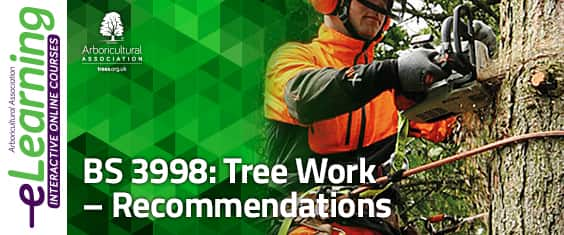 BS3998: 2010 Tree Work Recommendations